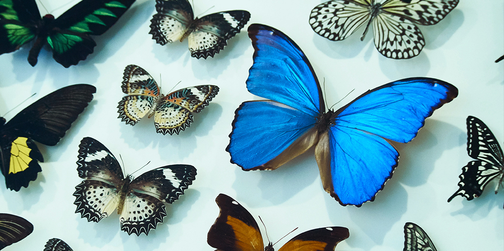 Have we crucified the Butterfly? The War between Science and Religion